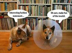 98 best cone of shame images on pinterest funny animal funny