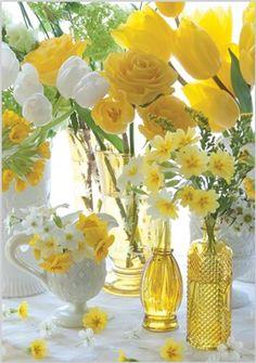 So pretty,Yellow & white Tulips - Sunshine - Spring.