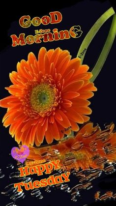 Good Morning Clips, Tuesday Quotes Good Morning, Good Morning Flowers, Bible Words Images, Good Evening Greetings, Happy Tuesday, Blessings, Thursday, English