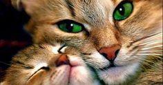 A primeira descoberta foi que os gatos dormem muito porque precisam repor as energias que perdem enquanto fazem a limpeza do ambiente. Isso não é uma novid