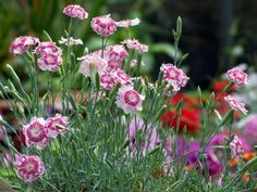 Add color to any yard with these rich and beautiful red, yellow, blue, pink and white perennial flowers. http://www.diynetwork.com/how-to/outdoors/gardening/10-colorful-perennials?soc=pinterest