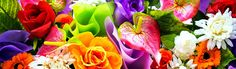 Bonsai Seeds, Website Header, Header Image, Joyful, Color, Colour, Colors