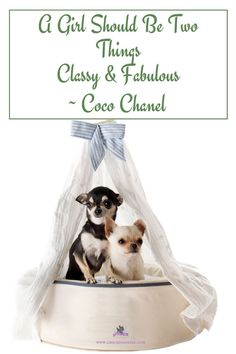For everything about the classy and fabulous Chihuahua visit us! #chihuahuaquotes, #chihuahuacare, #chihuahuapuppies, #seniorchihuahua, #chihuahuadogs, #chihuahuamix, #chihuahuafacts, #chihuahualifestyle, #chihuahuahealth, #chihuahuanutrition, #chihuahuatraining, #chihuahuabehavior, #chihuahuaarticles, #chihuahuahelp, #chiwawa, #chihuahuawebsite, #chi, #cutechihuahuas, #littledogs, #tinydogs, #minidogs Chihuahua Quotes, Chihuahua Facts, Chihuahua Dogs, Chihuahuas, Big Dog Little Dog, Big Dogs, Dog Information, Classy And Fabulous, Funny Photos