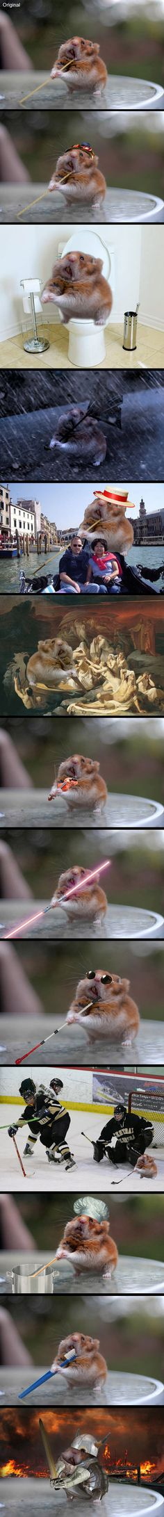A day in the life of Spaghetti Hamster, according to the internet.