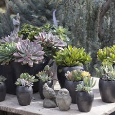 We still have succulent arrangements during the holidays.  Pick on up for a quick, beautiful, long-lasting gift.  http://rogersgardens.com/original-designs/