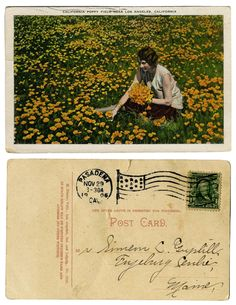 vintage postcard feat. california poppies & lovely handwriting.