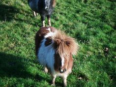 #Donkeys #LoveBallyseede Donkeys, Goats, Cow, Animals, Animales, Animaux, Donkey, Animal, Animais