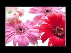 Abraham Hicks ~ still love him - YouTube