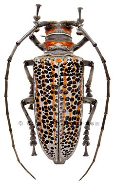 Beetle Insect, Beetle Bug, Insect Art, Cool Insects, Bugs And Insects, Longhorn Beetle, Bug Art, A Bug's Life, Snakes