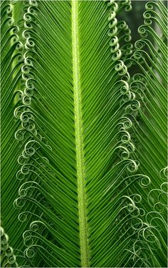 ✿⊱╮Palm Leaves. http://calgary.isgreen.ca/food-and-drink/recipes/yam-and-sweet-potatoes-in-fermented-bean-paste-vegan/