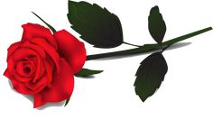 Rose PNG image with transparent background Flower Art Images, Rose Images, Rose Pictures, Rose Clipart, Flower Clipart, All Flowers, Large Flowers, Single Red Rose, Planting Roses