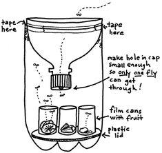 1000 images about bottle biology on pinterest biology bottle and fruit fly traps. Black Bedroom Furniture Sets. Home Design Ideas