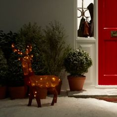 His name isn't Rudolph, so what would you name him? #Reindeer #Lights