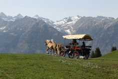 Start the spring with a horse drawn carriage ride