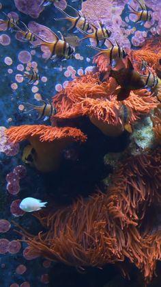 Aquarium 4K Live Wallpapers