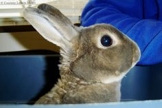 Unraveling The Mystery Of Rabbit Vision
