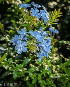 """""""O que o Sol é para as flores, os sorrisos são para a humanidade."""" (Joseph Addison) #setembrolindo #mesdaprimavera #flower #decorecomfoto @vicky_photos_infantis https://www.facebook.com/vickyphotosinfantis http://websta.me/n/vicky_photos_infantis https://www.pinterest.com/vickydfay https://www.flickr.com/vickyphotosinfantis"""