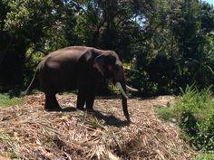 elephant. wild Elephant, Meet, Animals, Animaux, Animal, Animales, Elephants, Animais