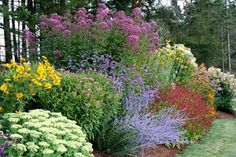 The light purple plant is catmint which we have in our for Perennial garden design zone 9