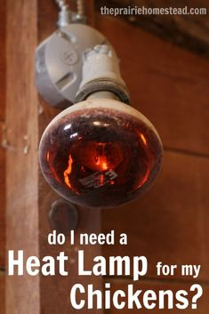 should I use a heat lamp in my chicken coop during winter?