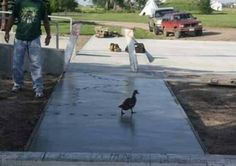 Bad Duck :P