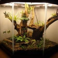 terrariuhttp://pinterest.com/all/#m