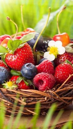 Justin Vo love fresh fruits: strawberries and berries Fruit And Veg, Fruits And Vegetables, Fresh Fruit, Beautiful Fruits, Fruit Art, Fruit Trees, Food Art, Harvest, Blueberry