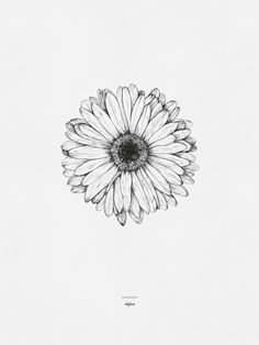 """Flower Drawing Discover Printables - Gerbera Drawing of the gerbera flower by inkylines. """"Because of you everything is more beautiful"""" thats where the gerbera stands for. Gerbera Daisy Tattoo, Gerbera Flower, Daisies Tattoo, Daisy Flower Tattoos, Tattoo Flowers, Watercolor Daisy Tattoo, Aster Flower, Flower Bouquets, Abstract Watercolor"""