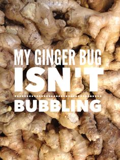 My Ginger Bug Isn't Bubbling