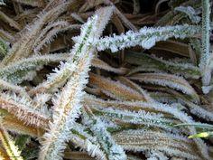Eisige kälte im Bergischen Land