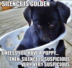 Silence with a puppy is very suspicious!!