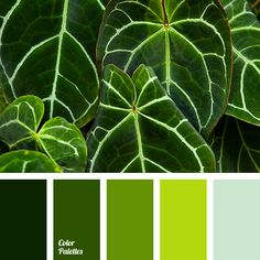 bright green, bright light green, color of green, color of green leaves, dark green, deep green, light green, pale green, shades of green.