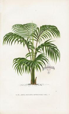 antique print trees - Google Search
