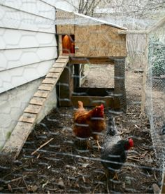 Chicken Coop! this might be more realistic of what kind of coop we'll have this year.