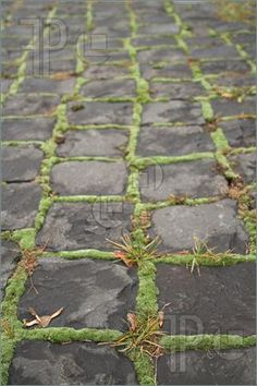 Perfect moss patio!!