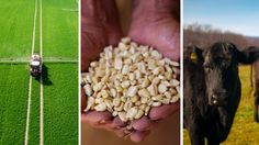The Future of Food Towards a Sustainable Food System for a Planet with 9 Billion People