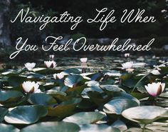Navigating Life When You Feel Overwhelmed — From Roses