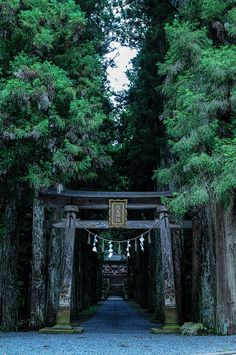 Japanese Forest Tori Gate - Picture Only
