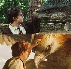*crying* I saw this and immediately thought of Buckbeak!