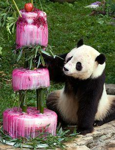Happy Birthday Tai Shan (born at Washington DC zo in 2005)