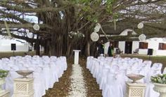 Ceremony under the trees at De Hoop Wedding Venues, Wedding Planning, Table Decorations, South Africa, Hoop, Trees, Home Decor, Wedding Reception Venues, Wedding Places