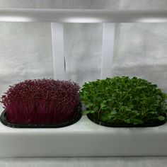 New pricing on LED micro farm