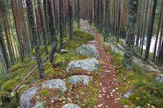 Petkeljärven kansallispuisto sijaitsee Ilomantsin kunnassa Pohjois-Karjalassa. Se on osa Pohjois-Karjalan biosfäärialuetta. Aluetta hoitaa Metsähallitus. Petkeljärven puiston erikoisuuksiin kuuluvat mm. arvokkaat, jyrkkärinteiset harjut sekä jatkosodan aikaiset taisteluhaudat ja -varustukset, joista osa on entisöity. Finland, Landscapes, Sidewalk, Hiking, Paisajes, Walks, Scenery, Side Walkway, Sidewalks