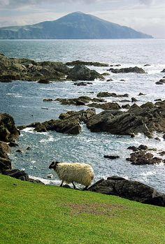 Achill Island, County Mayo, Ireland - one of my favorite places in Ireland Ireland Vacation, Ireland Travel, Places To Travel, Places To See, Love Ireland, Galway Ireland, Emerald Isle, Jolie Photo, British Isles