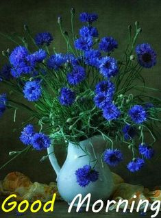 Morning Wish, Good Morning Quotes, Lovely Good Night, Good Morning Greetings, Morning Images, Corporate Gifts, Flowers, Plants, Italia
