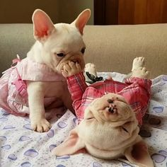 """""""shhh, shhhh..."""", When bae tries to wake you up for work on Monday. Funny French Bulldog Puppies❤❤"""
