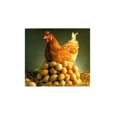 I want these Rhode Island crosses. Chickens For Sale, Brown Eggs, Rooster, Pets, Animals, Image, Rhode Island, Crosses, Farming