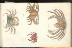 Herbst Crabs & Lobsters Plate XVII