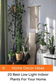 A quick, easy way to make a room look better and liven up any space is with indoor plants. Here's our list of low light houseplants, so you can up your home decor without much effort.