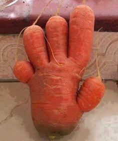 Cette photo doigts carotte sur la rubrique Alimentation